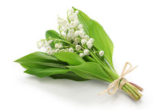 Liljekonvaljliten bukett Royaltyfri Fotografi