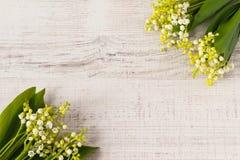 Liljekonvaljram arkivfoto