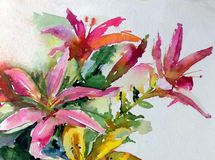 Liljor för blomning för blommor för färgrik sommar för natur för vattenfärgkonstbakgrund arbeta i trädgården röda rosa härliga royaltyfri illustrationer