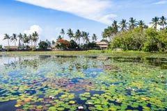 Liljor i Bali Arkivbilder