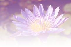 Liljor i mjuk suddighetsbokeh för bakgrund Arkivfoto