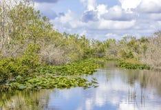 Liljor och sawgrass som växer på en vattenväg i Evergladesnationalparken i Florida, USA royaltyfria foton