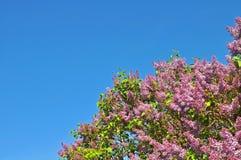 Lillà e cielo blu dentellare Fotografia Stock