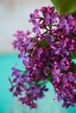 Lillà sul fondo del turchese, colori piacevoli magici Fotografie Stock
