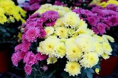 Lilla blommor Arkivbilder