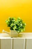 lilla bonsai royaltyfri fotografi