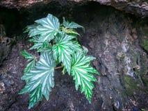 Lilla Bush av den gröna växten med den unika bladmodellen under vagga Royaltyfri Fotografi
