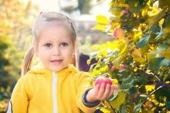 Lilla flickan behandla som ett barn äter säsongsbetonade äpplen fotografering för bildbyråer