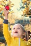 Lilla flickan behandla som ett barn äter säsongsbetonade äpplen royaltyfri bild