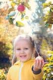 Lilla flickan behandla som ett barn äter säsongsbetonade äpplen royaltyfria bilder