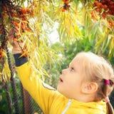 Lilla flickan behandla som ett barn äter säsongsbetonade hav-buckthorn bär arkivbild