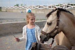 Lilla flickan gör ren och kammar hennes ponny och sadlar honom arkivbilder