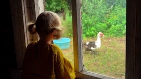 Lilla flickan håller ögonen på en kalkon från fönstret lager videofilmer
