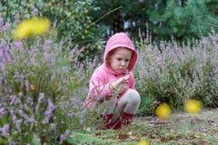 Lilla flickan med att studera den purpurfärgade callunaen blommar i sommarskog royaltyfri foto