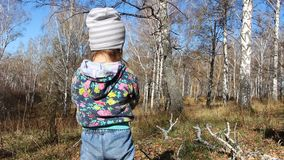Lilla flickan samlar torra filialer av träd i höstskogen arkivfilmer
