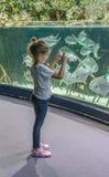 Lilla flickan ser akvariet och tar bilder av den stora fisken arkivfoton