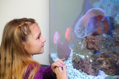 Lilla flickan ser tre clorful fiskar som simmar i akvarium. Royaltyfri Bild