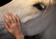 Lilla flickan som klappar en vit häst, genom försiktigt att smeka hans huvud med henne, gömma i handflatan handen arkivfoto