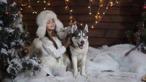 Lilla flickan spelar med en skrovlig near julgran för hund arkivfilmer