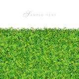 lilla gröna växter för gräs Arkivbild
