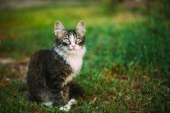 Lilla gulliga roliga Gray Cat Kitten Play In Grass Sommar Arkivbild