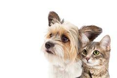 Lilla hund och Cat Together Closeup Arkivbild