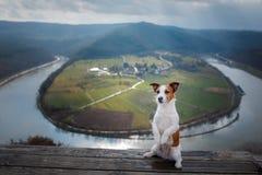 Lilla Jack Russell på klippablickarna på floden Hund med sikt av naturhusdjuret på semestern, tur, sund livsstil royaltyfri bild