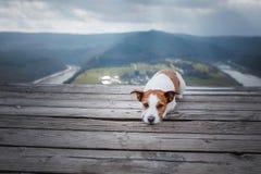Lilla Jack Russell på klippablickarna på floden Hund med sikt av naturhusdjuret på semestern, tur, sund livsstil royaltyfria bilder