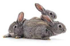lilla kaniner tre royaltyfri fotografi