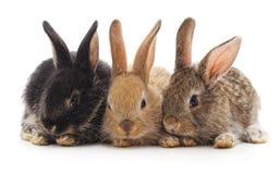 lilla kaniner tre royaltyfri foto