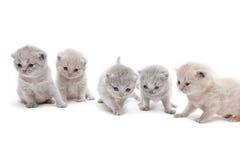 lilla kattungar Royaltyfri Bild