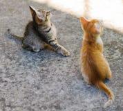 Lilla kattungar utomhus Royaltyfria Bilder