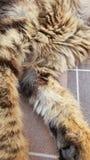 LILLA KITTY CAT royaltyfri bild