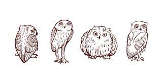 Lilla Owl Set Royaltyfria Foton