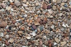 Lilla Seasheel Fotografering för Bildbyråer
