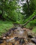 Lilla ström eller Beck - North Yorkshire - UK Arkivbild