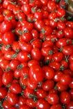 lilla tomater Royaltyfri Bild