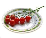 lilla tomater Arkivfoto