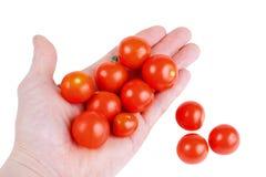 lilla tomater för Cherryred arkivfoto