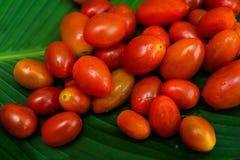 lilla tomater för Cherryred Arkivfoton