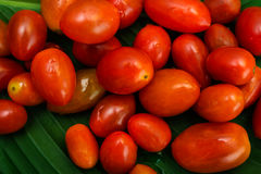 lilla tomater för Cherryred Arkivbilder