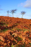 lilla tre trees Royaltyfri Bild