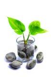 Lilla växt och Zen Stone Royaltyfria Bilder