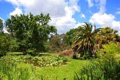 lilla växter för aquaticslagun Royaltyfri Fotografi
