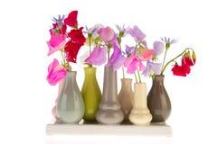 lilla vases för lathyrus Royaltyfri Bild