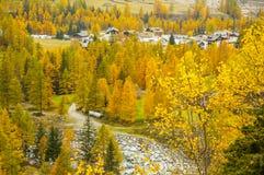 Lillaz im Herbst Lizenzfreie Stockbilder