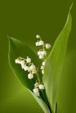 lillies κοιλάδα Στοκ εικόνα με δικαίωμα ελεύθερης χρήσης