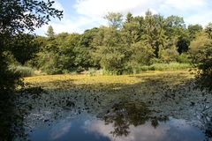 Lillies воды и плавая планка Стоковая Фотография RF