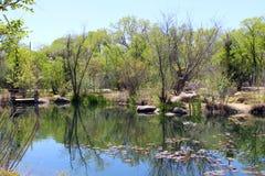 Lillies auf dem Teich stockfoto