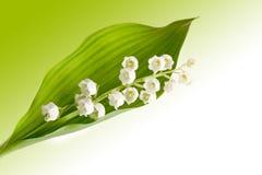 Lillies für immer Lizenzfreie Stockfotografie